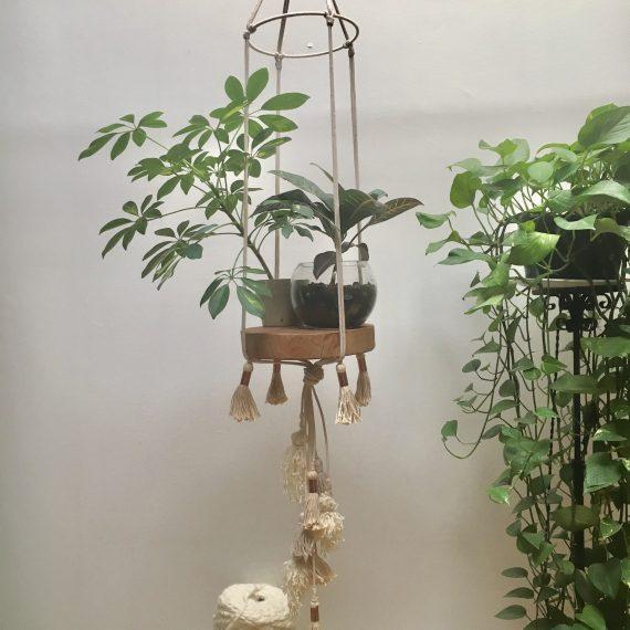 Suspension plante bois